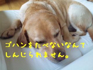 DVC00473_20110901141943.jpg