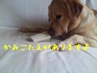 DVC00511_20110902135419.jpg