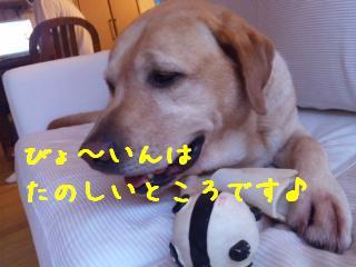 DVC00516_20110906113100.jpg