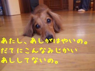 DVC00518_20110824134235.jpg