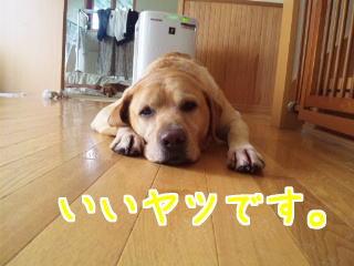 DVC00529_20110821133313.jpg
