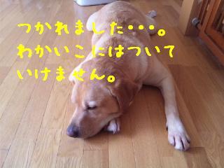 DVC00530_20110824134235.jpg