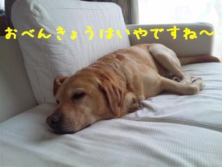 DVC00546.jpg