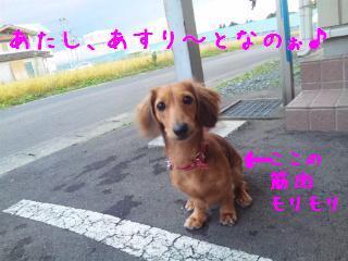DVC00575_20111013134823.jpg