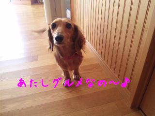 DVC00579_20111003141907.jpg