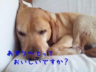 DVC00583_20111013134413.jpg