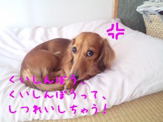DVC00595_20111013134102.jpg