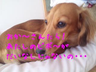 DVC00602_20111018092245.jpg