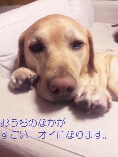 DVC00688_20111225104735.jpg