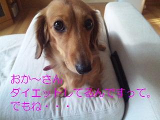 DVC00695_20111227180943.jpg