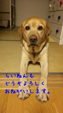 DVC00696_20111228142714.jpg