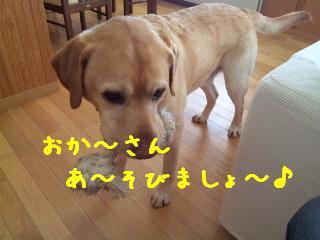 DVC00772_20120216093040.jpg