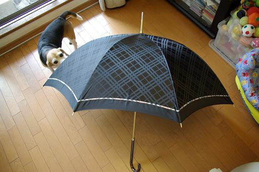 110508-34umbrella.jpg