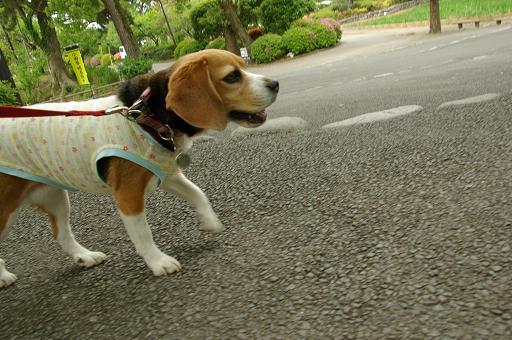 110503-05chara walk