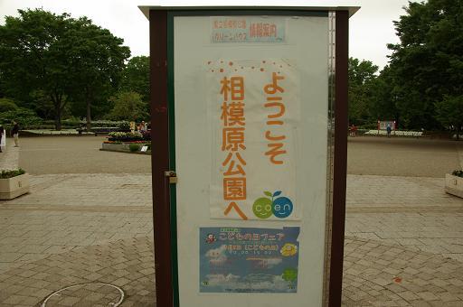 110505-02sagamihara park