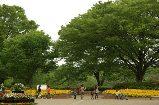 110505-03sagamihara park2