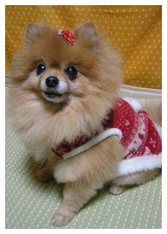 クリスマスぽいお洋服♪