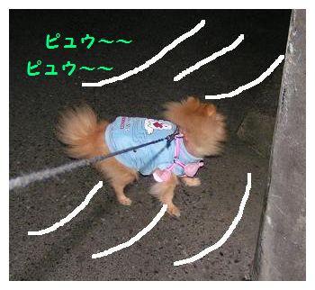 すごい風です~