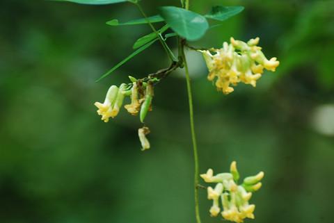 黄色い花が?1