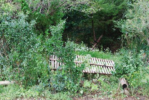 倒れた竹フェンス