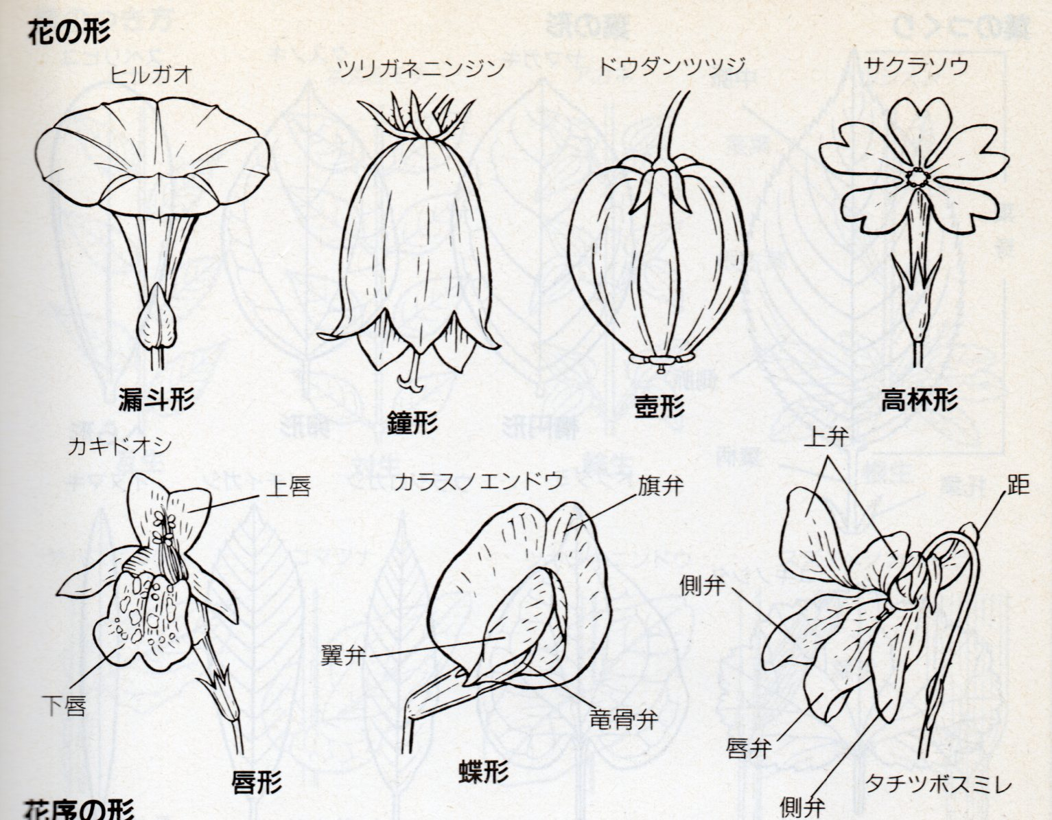 花の形009