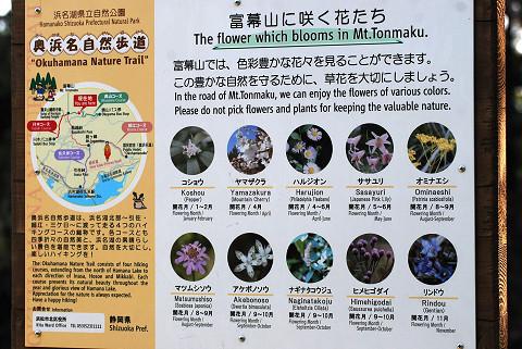 富幕山に咲く花の看板