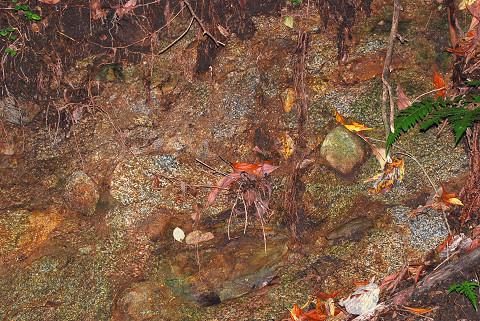 花崗閃緑斑岩