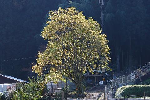 孤立した樹木が