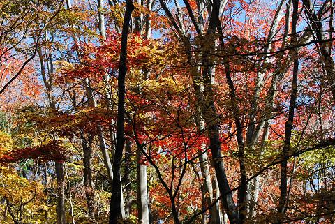 雑木林の紅葉がきれい