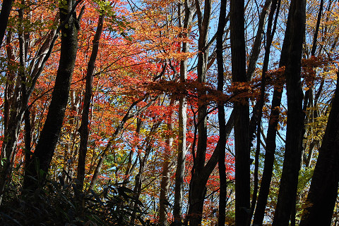 雑木林の紅葉がきれい2