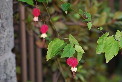 この赤い花は?