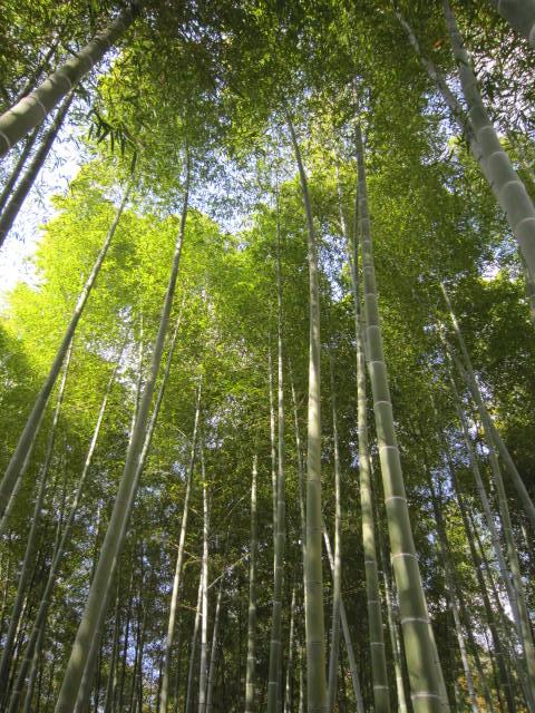 京都旅行09年11月24~27日 305