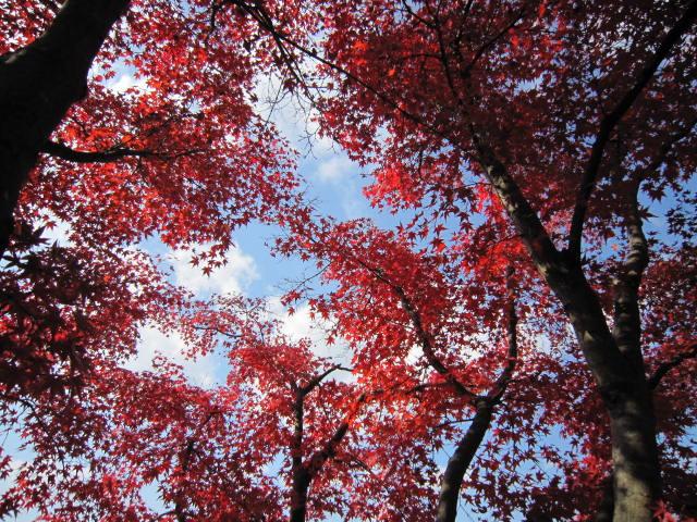 京都旅行09年11月24~27日 329