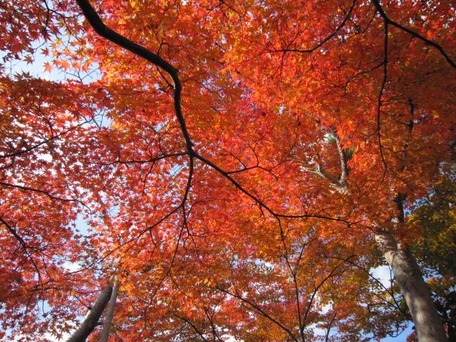 京都旅行09年11月24~27日 337