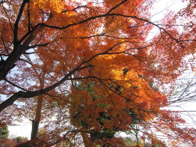 京都旅行09年11月24~27日 342