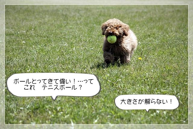 虎太郎03