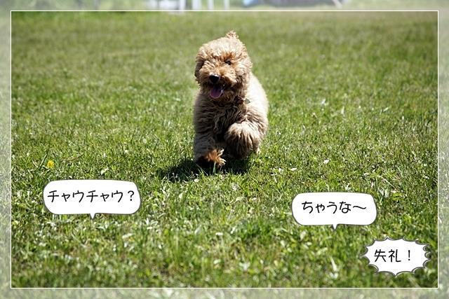 虎太郎02