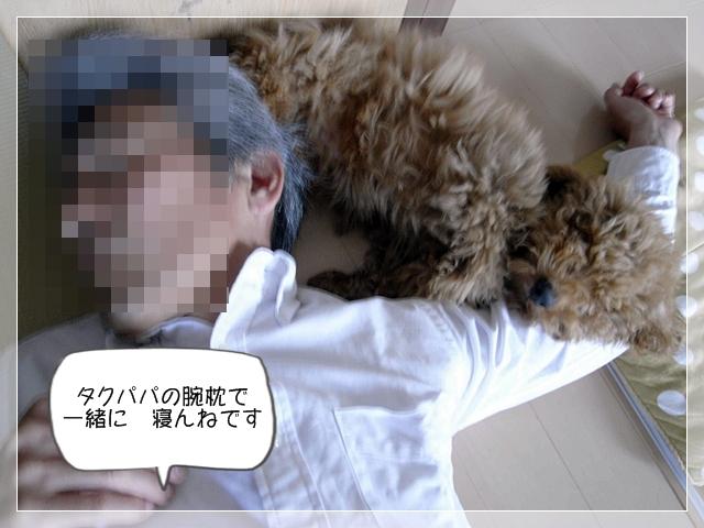 虎太郎カットす!06