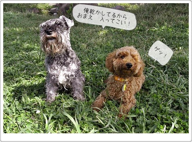虎太郎の友達11