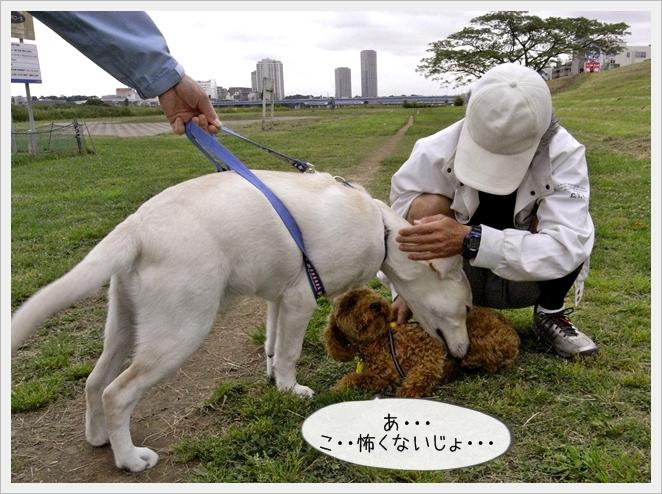 虎太郎日記04