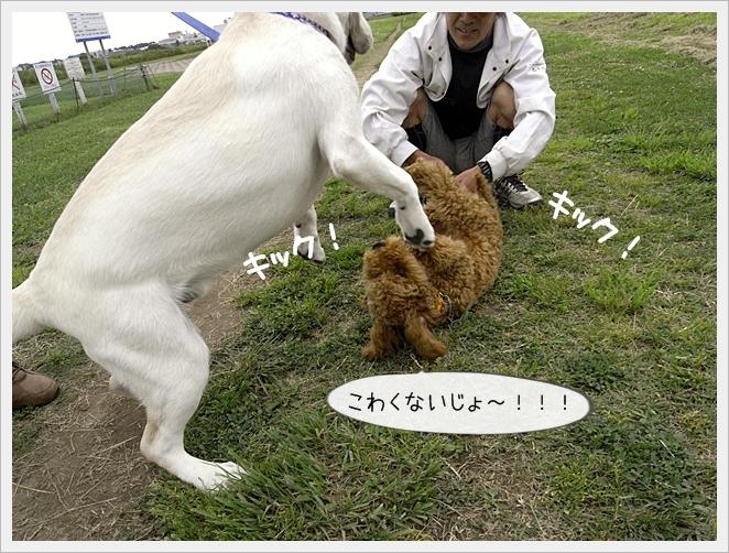 虎太郎日記05