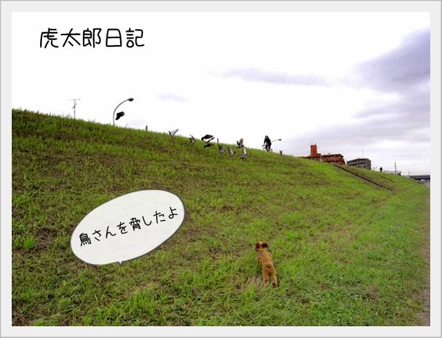 虎太郎日記01