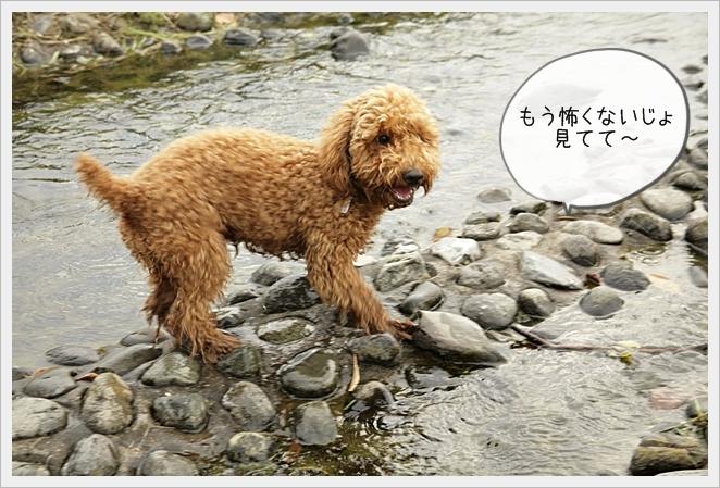 虎太郎日記11