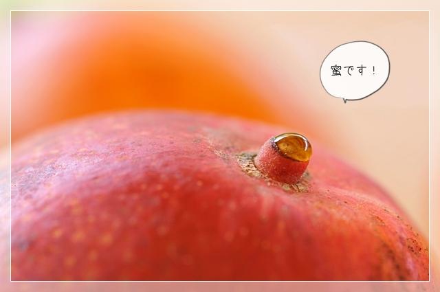 マンゴー!05