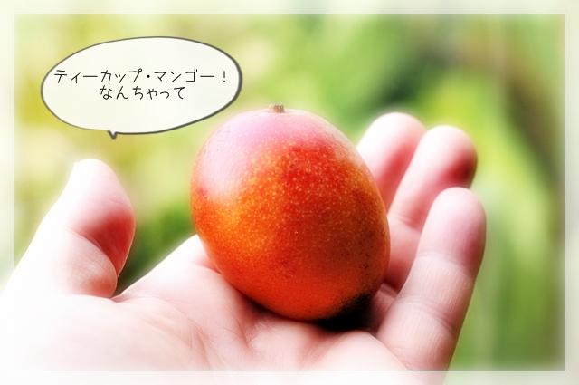 マンゴー!08