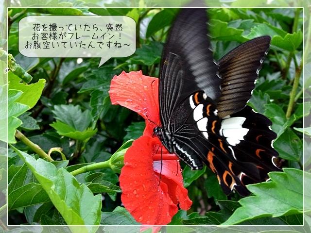 梅雨の庭05