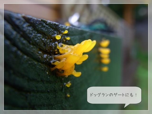 梅雨の庭03