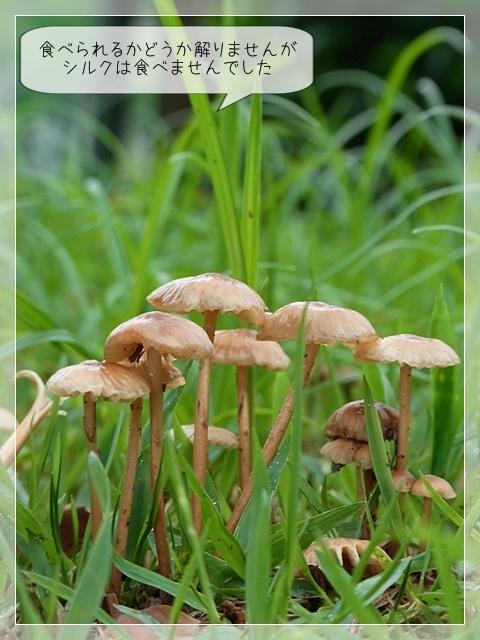 梅雨の庭01