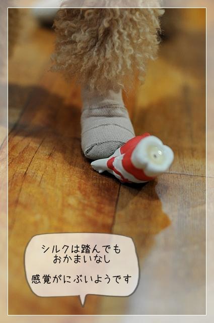 シルク怪我05
