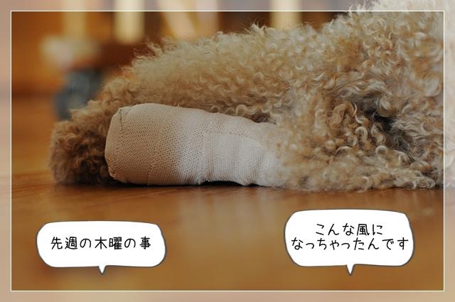 シルク怪我01
